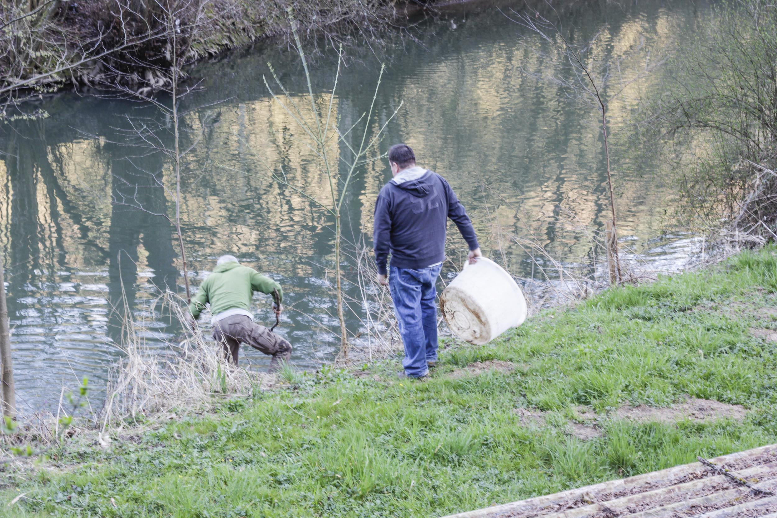 Fischbesatz an der Elsenz