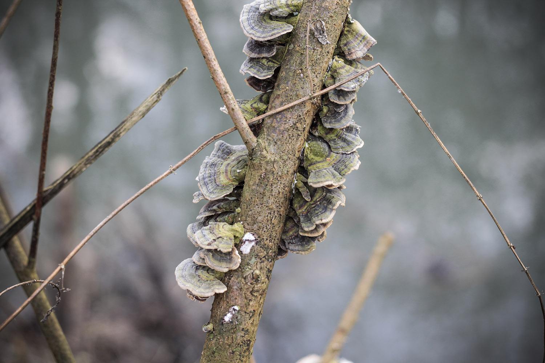 Frühjahrsschnitt an der Vereinsgewässer Elsenz